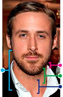 barbe progressive