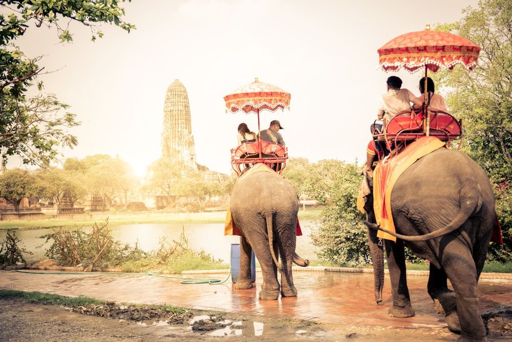 S'occuper d'éléphant en Thailande